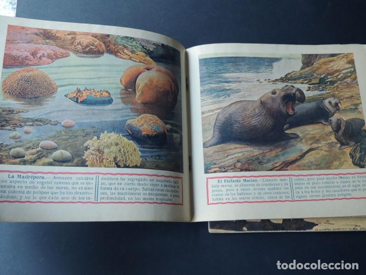 Libros de segunda mano: EL REINO ANIMAL PARANIÑOS / 5 EJEMPLARES / RAMON SOPENA - Foto 7 - 157912022