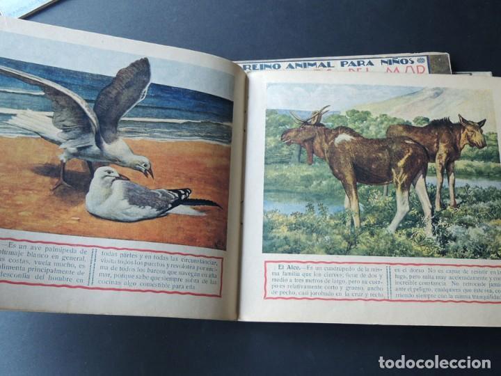 Libros de segunda mano: EL REINO ANIMAL PARANIÑOS / 5 EJEMPLARES / RAMON SOPENA - Foto 8 - 157912022