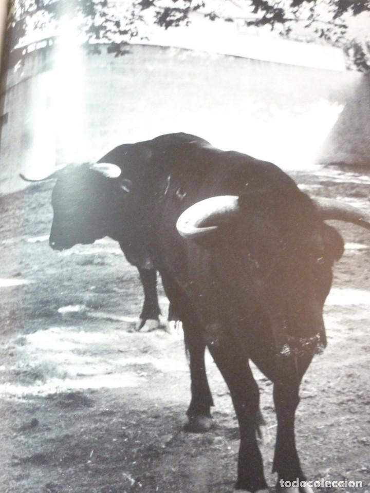 Libros de segunda mano: LIBRO TAUROMAQUIA. EDICIONES NAUTA. FOTOS F. CATALÁ. PRIMERA EDICION 1962 - Foto 11 - 163603830