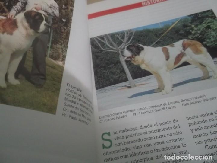 Libros de segunda mano: EL NUEVO LIBRO DEL SAN BERNARDO -SALVADOR GÓMEZ TOLDRÁ ,EDICIONES TIKAL 207 PGN - Foto 4 - 167167540