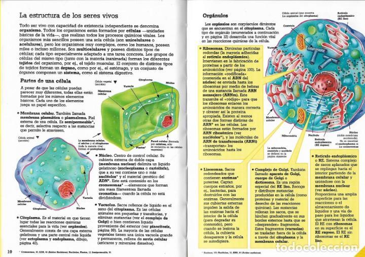 Diccionario De Biología Corinne Stockley Montena Aula Ediciones Montena S A 1987