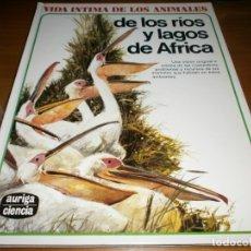 Libros de segunda mano: VIDA INTIMA DE LOS ANIMALES DE LOS RÍOS Y LAGOS DE ÁFRICA - Nº 19 - EDICIONES RIALP - 8ª ED., 1991. Lote 175881713