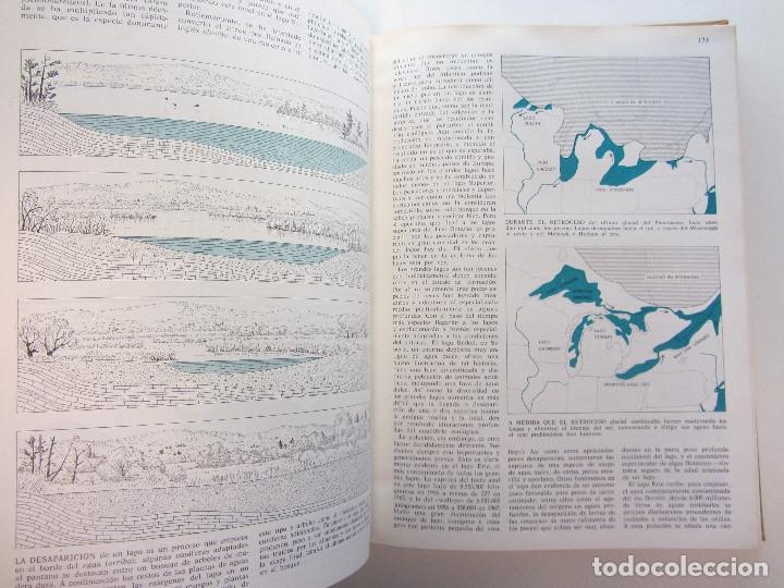 Libros de segunda mano: El hombre y la ecosfera. Paul R. Ehrlich, John P. Holdren, Richard W. Holm. Tapa dura. Ilustrado - Foto 6 - 179173695