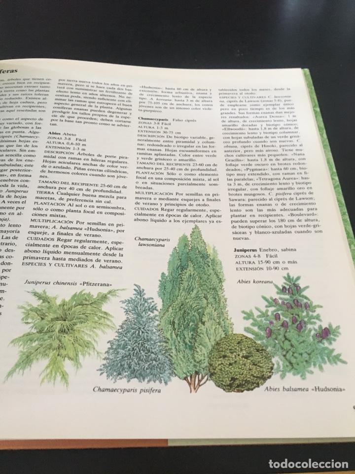 Libros de segunda mano: EL JARDÍN ENTRE MACETAS GUÍA ILUSTRADA PARA EL CUIDADO DE LAS PLANTAS - Foto 5 - 180862612