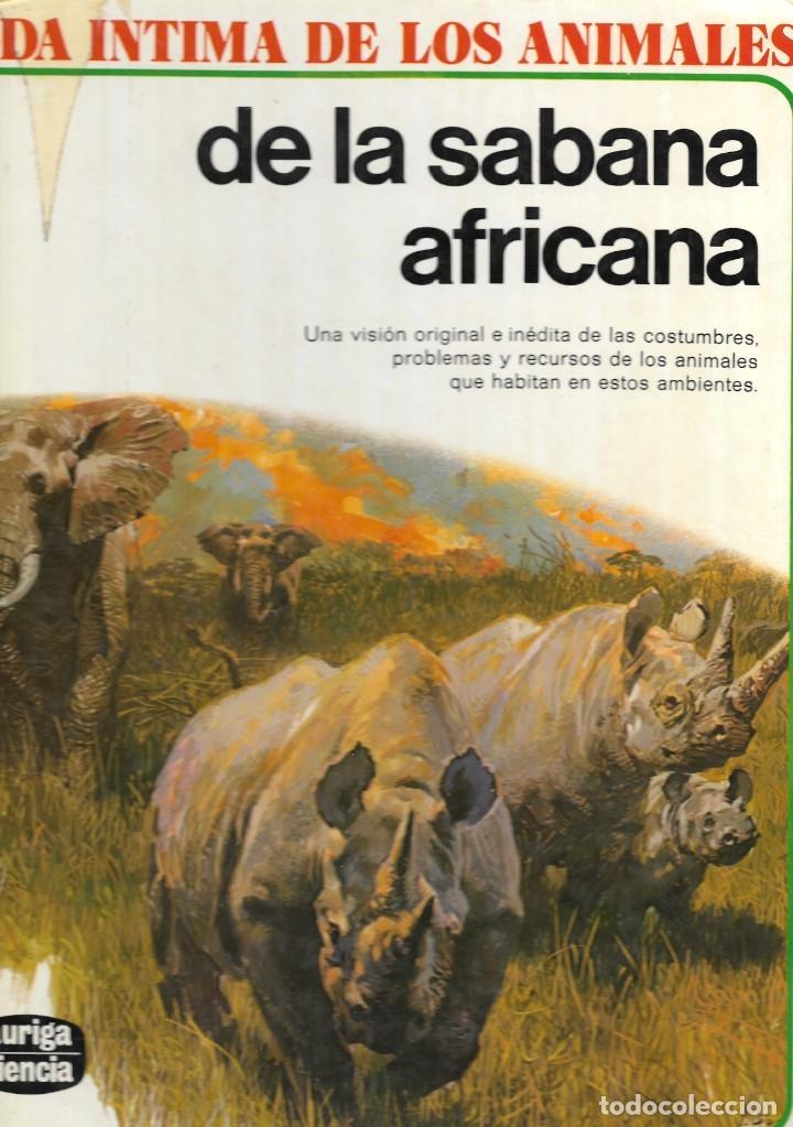VIDA INTIMA DE LOS ANIMALES DE LA SABANA AFRICANA - Nº 17 - EDICIONES RIALP, 9ª EDICIÓN, 1989. (Libros de Segunda Mano - Literatura Infantil y Juvenil - Otros)