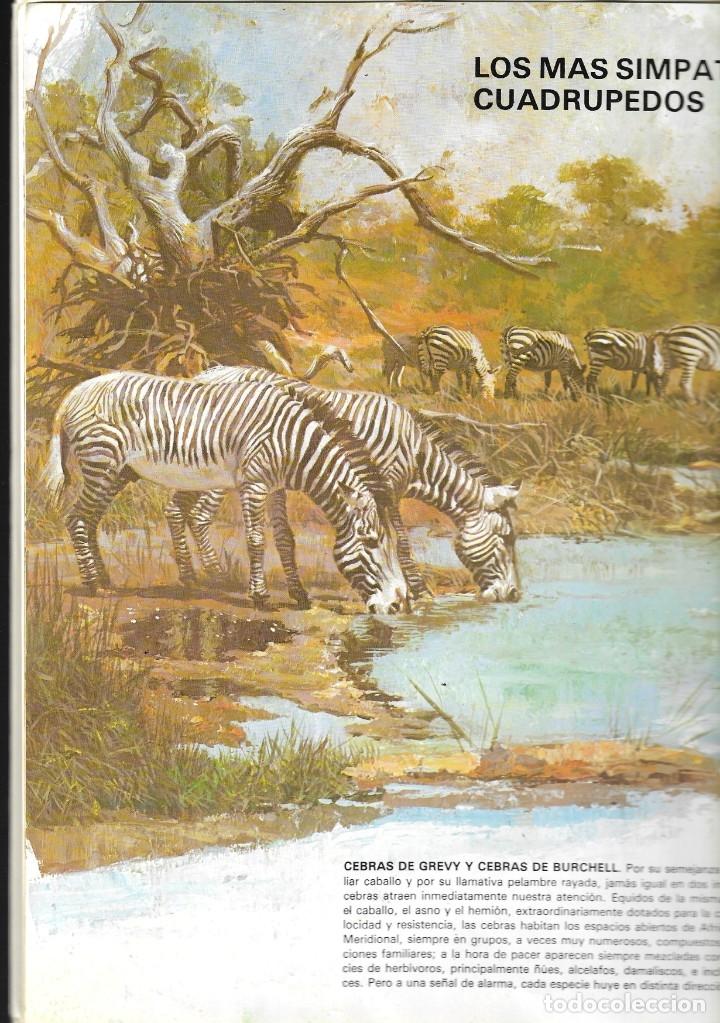 Libros de segunda mano: VIDA INTIMA DE LOS ANIMALES DE LA SABANA AFRICANA - Nº 17 - EDICIONES RIALP, 9ª Edición, 1989. - Foto 2 - 182105200