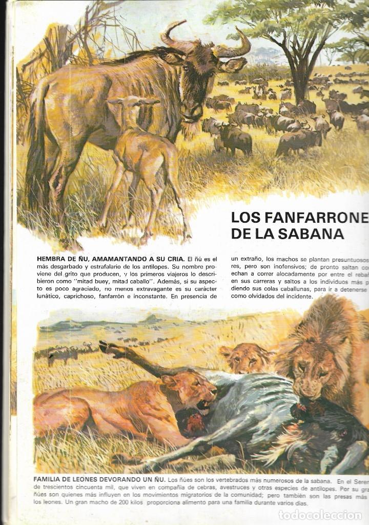 Libros de segunda mano: VIDA INTIMA DE LOS ANIMALES DE LA SABANA AFRICANA - Nº 17 - EDICIONES RIALP, 9ª Edición, 1989. - Foto 3 - 182105200