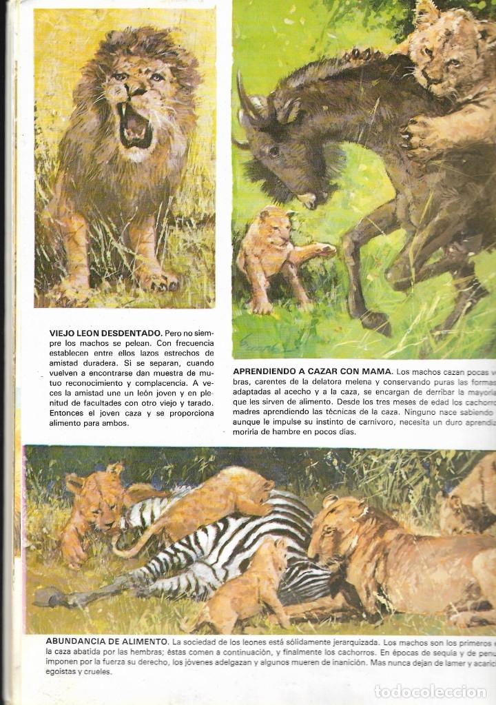 Libros de segunda mano: VIDA INTIMA DE LOS ANIMALES DE LA SABANA AFRICANA - Nº 17 - EDICIONES RIALP, 9ª Edición, 1989. - Foto 4 - 182105200