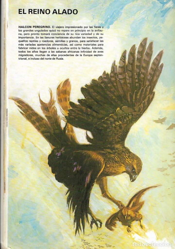 Libros de segunda mano: VIDA INTIMA DE LOS ANIMALES DE LA SABANA AFRICANA - Nº 17 - EDICIONES RIALP, 9ª Edición, 1989. - Foto 5 - 182105200