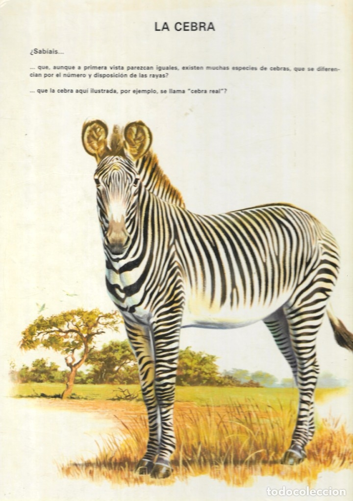 Libros de segunda mano: VIDA INTIMA DE LOS ANIMALES DE LA SABANA AFRICANA - Nº 17 - EDICIONES RIALP, 9ª Edición, 1989. - Foto 6 - 182105200