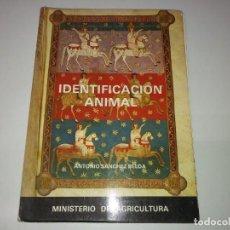 Libros de segunda mano: LIBRO AÑO 1981 IDENTIFICACIÓN ANIMAL ANTONIO SÁNCHEZ BELDA VETERINARIO MINISTERIO DE AGRICULTURA . Lote 192013562