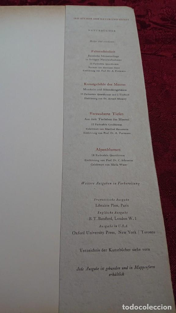Libros de segunda mano: ALTCHRISTLICHE MOSAIKEN VORWORT VON RICARDA HVCH MOSAICOS CRISTIANOS ANTIGUOS ROMA NAPOLES MILAN - Foto 19 - 194240996