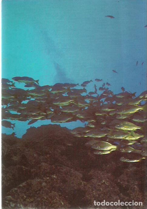 Libros de segunda mano: Jose Pascual Fernández-Entre el Mar y la Tierra.Los Pescadores Artesanales Canarios.Interinsular. - Foto 2 - 194523120