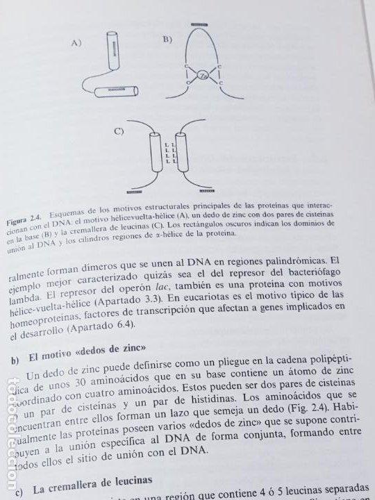 Libros de segunda mano: libro-manual de genética molecular 3-ciencias de la vida-1990-editora síntesis-Javier león serrano++ - Foto 11 - 195417190
