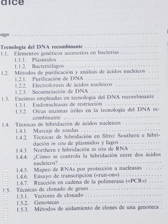 Libros de segunda mano: libro-manual de genética molecular 3-ciencias de la vida-1990-editora síntesis-Javier león serrano++ - Foto 12 - 195417190