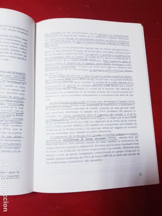 Libros de segunda mano: libro-manual de genética molecular 3-ciencias de la vida-1990-editora síntesis-Javier león serrano++ - Foto 13 - 195417190