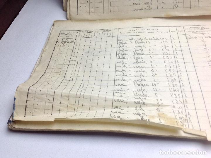 Libros de segunda mano: LIBRO DE REGISTRO DE GANADO - AYUNTAMIENTO DE SON DEL PINO - SON -VALENCIA DE ANEU - LERIDA - Foto 6 - 195424496