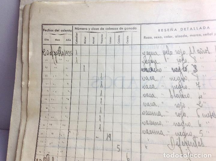 Libros de segunda mano: LIBRO DE REGISTRO DE GANADO - AYUNTAMIENTO DE SON DEL PINO - SON -VALENCIA DE ANEU - LERIDA - Foto 8 - 195424496