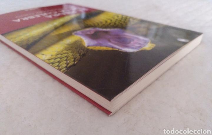 Libros de segunda mano: La piedra de la culebra. Milio Rodríguez Cueto. Libro - Foto 5 - 195503833