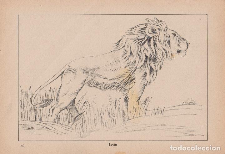 Libros de segunda mano: VADEMECUM DE DIBUJO – ZOOGRAFIA III – J.CAMINS – EDITORIAL M.A.SALVATELLA – 15 LÁMINAS - Foto 2 - 196758663