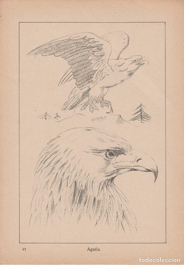 Libros de segunda mano: VADEMECUM DE DIBUJO – ZOOGRAFIA III – J.CAMINS – EDITORIAL M.A.SALVATELLA – 15 LÁMINAS - Foto 3 - 196758663