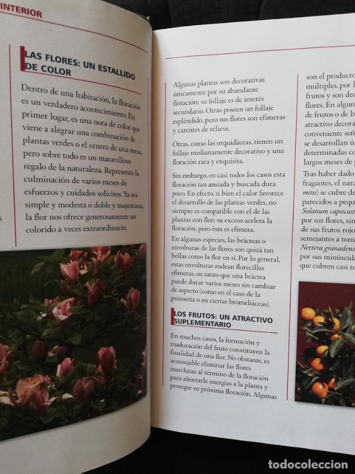 Libros de segunda mano: EL GRAN LIBRO DE LAS PLANTAS DE INTERIOR - PIERRE NESSMANN - Foto 3 - 205148137