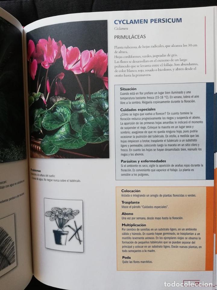 Libros de segunda mano: EL GRAN LIBRO DE LAS PLANTAS DE INTERIOR - PIERRE NESSMANN - Foto 4 - 205148137
