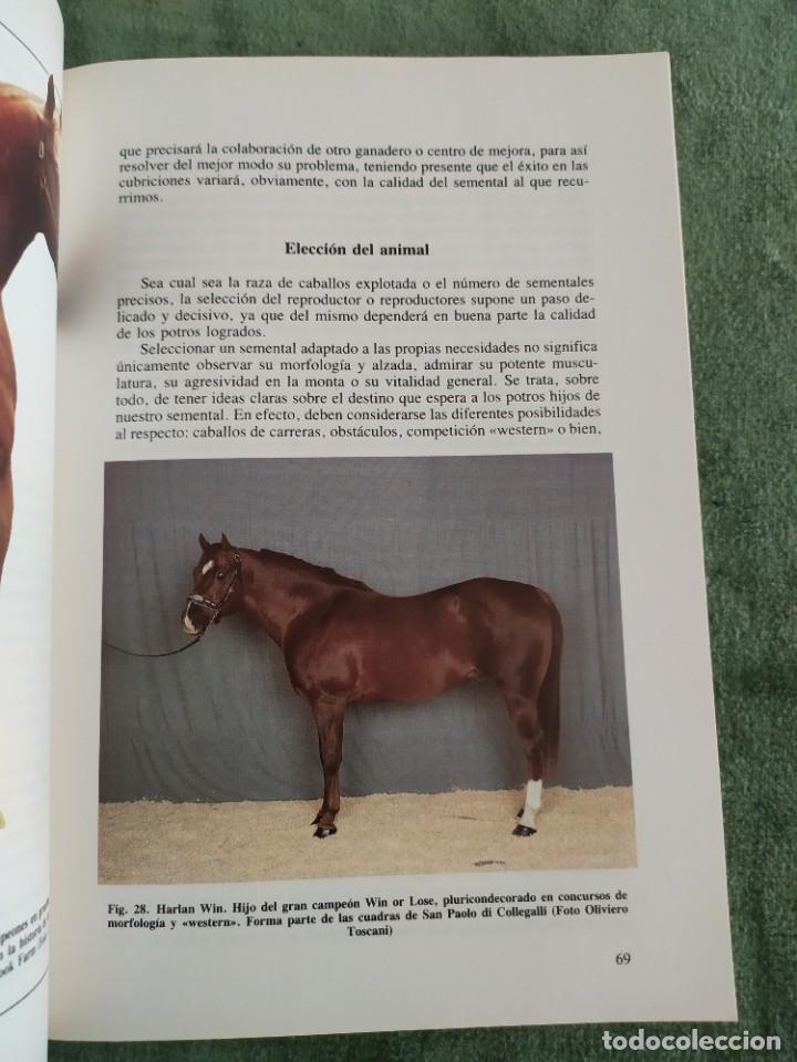 Libros de segunda mano: 1990. El caballo, cría y manejo. Dedicado por el traductor (Catedrático). - Foto 8 - 206367830
