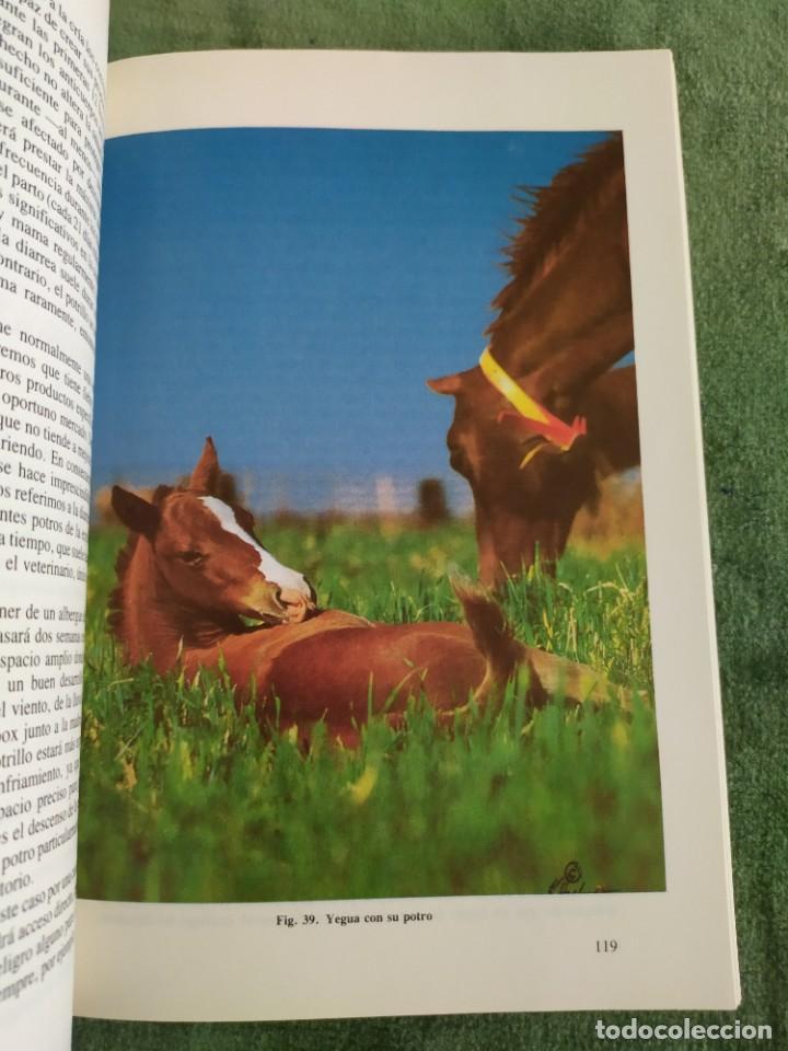 Libros de segunda mano: 1990. El caballo, cría y manejo. Dedicado por el traductor (Catedrático). - Foto 10 - 206367830