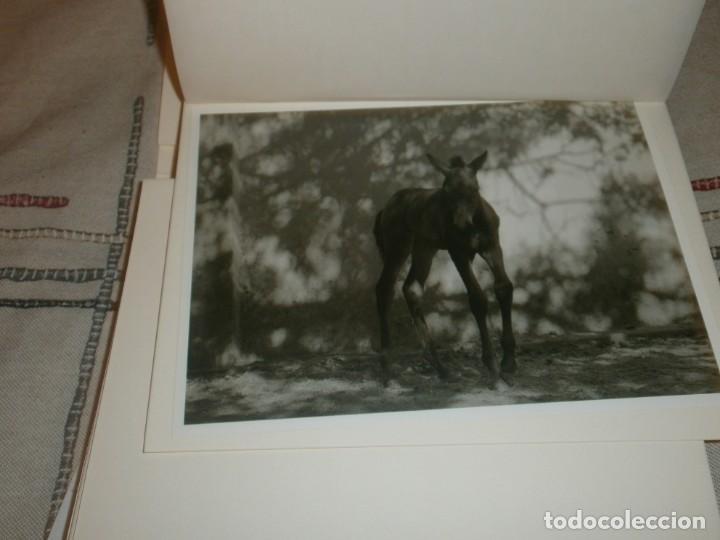 Libros de segunda mano: El caballo de pura raza española edición limitada 1500 libro con 12 fotografias Javier Herranz - Foto 3 - 206580285