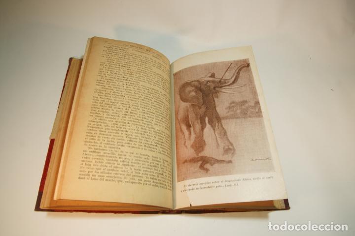 Libros de segunda mano: La esclava blanca. Mayne Reid. Las minas del rey salomón. Rider Haggard. 1ª edición. 1927. BCN. - Foto 6 - 208816395