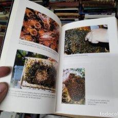 Libros de segunda mano: EL MÓN DE LES ABELLES A BALEARS. BARTOMEU BARCELÓ.. 2002 . MALLORCA , MENORCA , EIVISSA. Lote 210617652