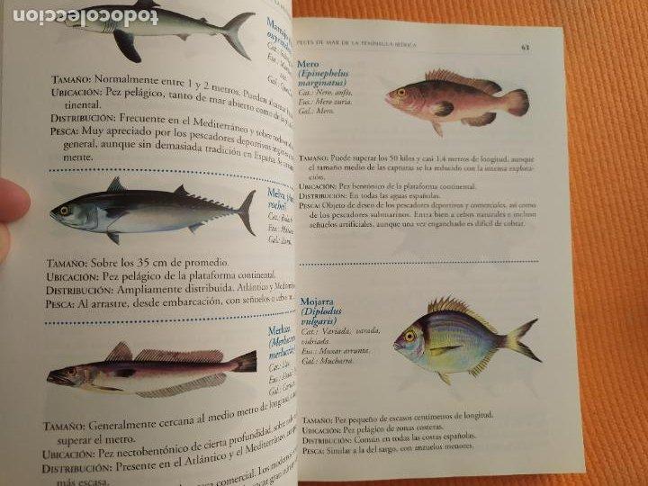 Libros de segunda mano: GUIA DE LA PESCA ES ESPAÑA JUAN DELIBES - Foto 2 - 230972780
