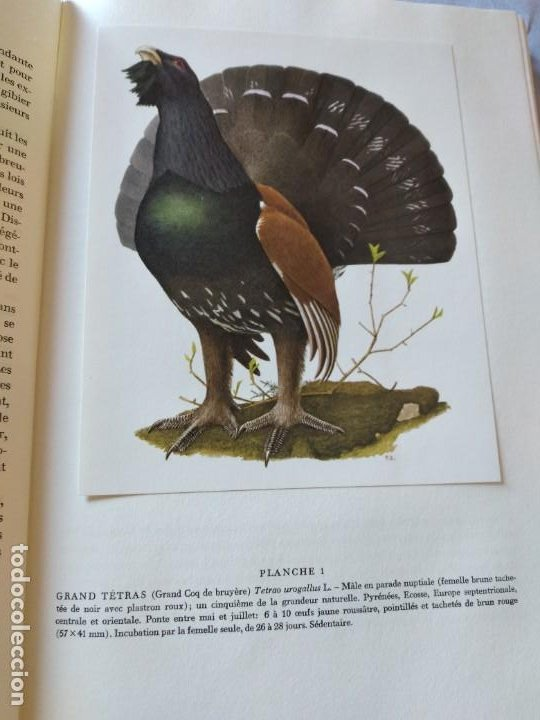 Libros de segunda mano: Las aves reproductoras de Europa(Volumen 3). les oiseau nicheurs d´europe,paul géroudet,1967,frances - Foto 6 - 236298945