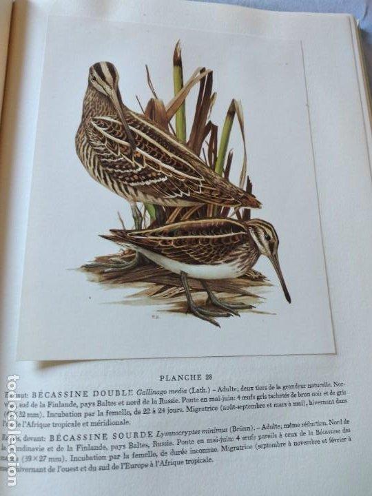 Libros de segunda mano: Las aves reproductoras de Europa(Volumen 3). les oiseau nicheurs d´europe,paul géroudet,1967,frances - Foto 10 - 236298945