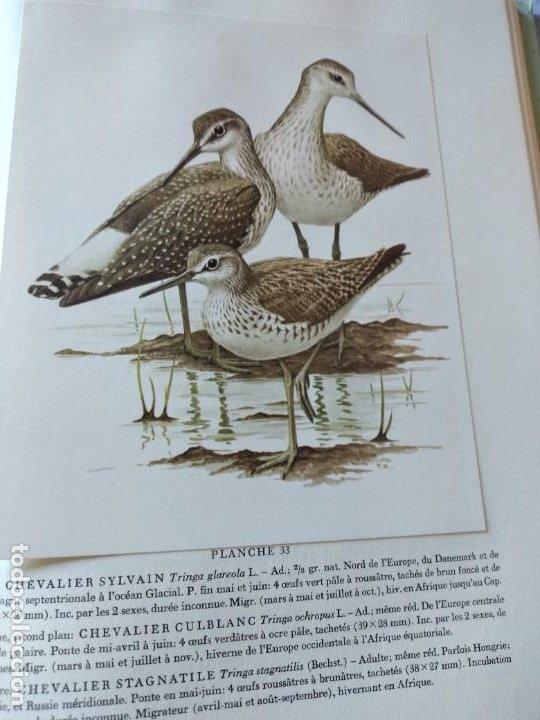 Libros de segunda mano: Las aves reproductoras de Europa(Volumen 3). les oiseau nicheurs d´europe,paul géroudet,1967,frances - Foto 11 - 236298945