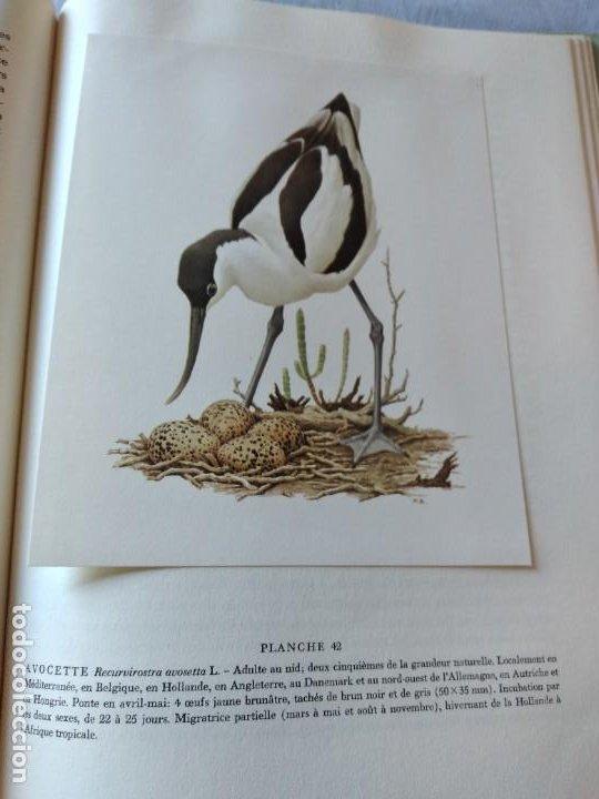 Libros de segunda mano: Las aves reproductoras de Europa(Volumen 3). les oiseau nicheurs d´europe,paul géroudet,1967,frances - Foto 12 - 236298945