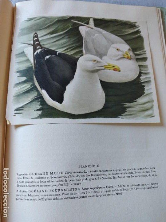 Libros de segunda mano: Las aves reproductoras de Europa(Volumen 3). les oiseau nicheurs d´europe,paul géroudet,1967,frances - Foto 13 - 236298945