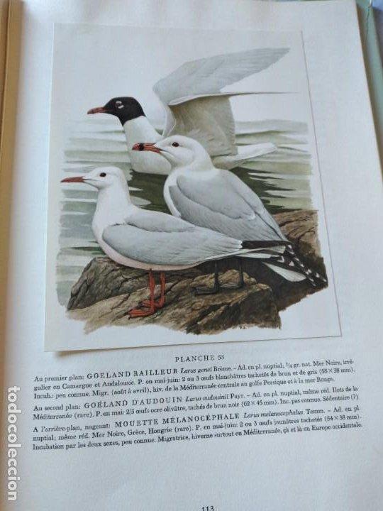 Libros de segunda mano: Las aves reproductoras de Europa(Volumen 3). les oiseau nicheurs d´europe,paul géroudet,1967,frances - Foto 14 - 236298945