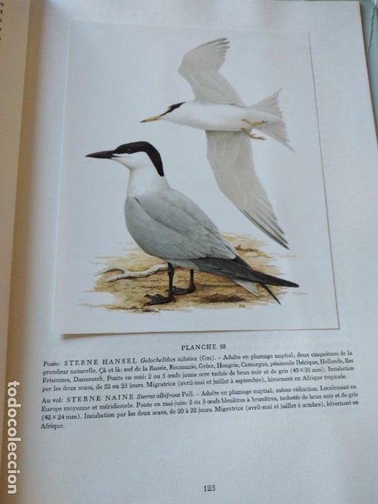 Libros de segunda mano: Las aves reproductoras de Europa(Volumen 3). les oiseau nicheurs d´europe,paul géroudet,1967,frances - Foto 15 - 236298945