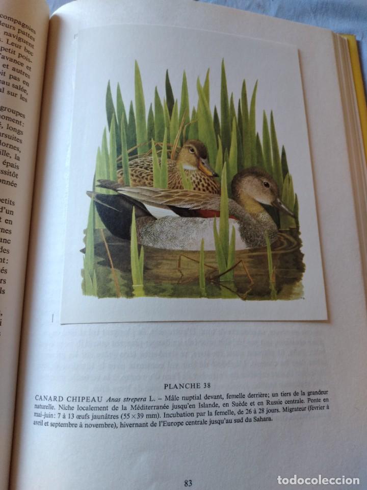 Libros de segunda mano: Las aves reproductoras de Europa(Volumen 4). les oiseau nicheurs d´europe,paul géroudet,1962,frances - Foto 12 - 236299050