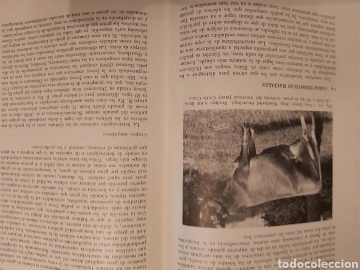 Libros de segunda mano: PRODUCCIÓN ANIMAL. HH . COLE. LIBRO DE GANADERÍA. ED ACRIBIA 1964 ZARAGOZA. - Foto 13 - 271353563