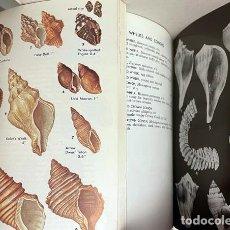 Libros de segunda mano: 2 GUÍAS DE CONCHAS : 1.- A FIELD GUIDE TO SHELLS OF THE ATLANTIC… 2.- A GUIDE TO FIELD IDENTIFICATIO. Lote 275256508