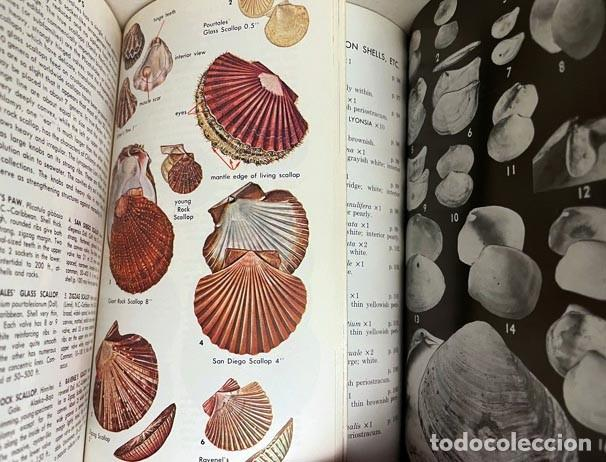Libros de segunda mano: 2 Guías de Conchas : 1.- A Field Guide to Shells of the Atlantic… 2.- A Guide to Field Identificatio - Foto 3 - 275256508