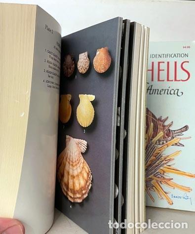 Libros de segunda mano: 2 Guías de Conchas : 1.- A Field Guide to Shells of the Atlantic… 2.- A Guide to Field Identificatio - Foto 4 - 275256508
