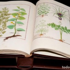 Libros de segunda mano: LIBRO DE LOS MEDICAMENTOS SIMPLES MOLEIRO + ESTUDIOS FACSIML A ESTRENAR CAJA Nº 33 DIBUJO BOTÁNICA. Lote 277686958