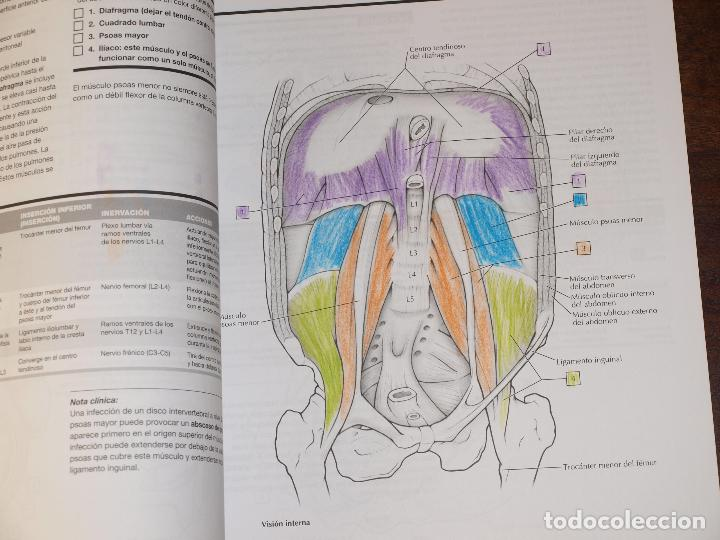 cuaderno de anatomia para colorear.netter. john - Comprar Libros de ...