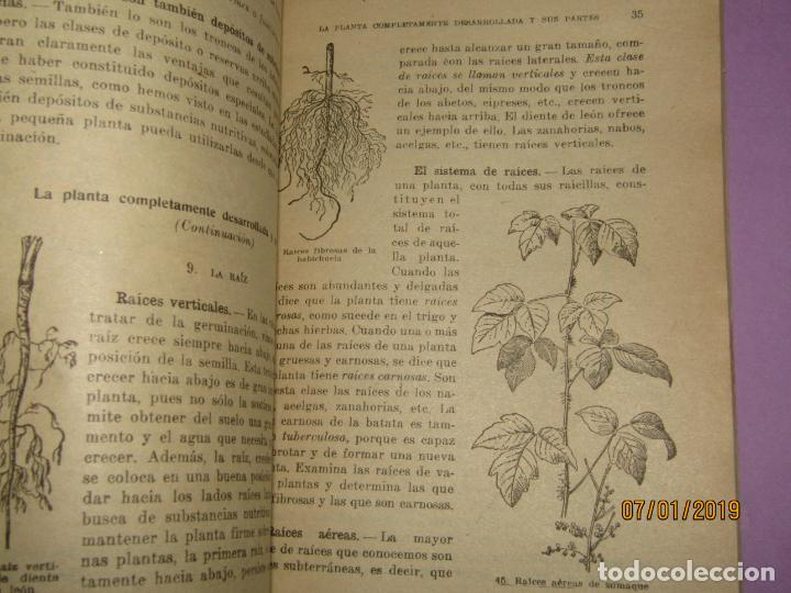 Libros de segunda mano: Antiguo Libro de Escuela VIDA DE ANIMALES Y PLANTAS Editorial PARANINFO - Año 1963 - Foto 3 - 146169310