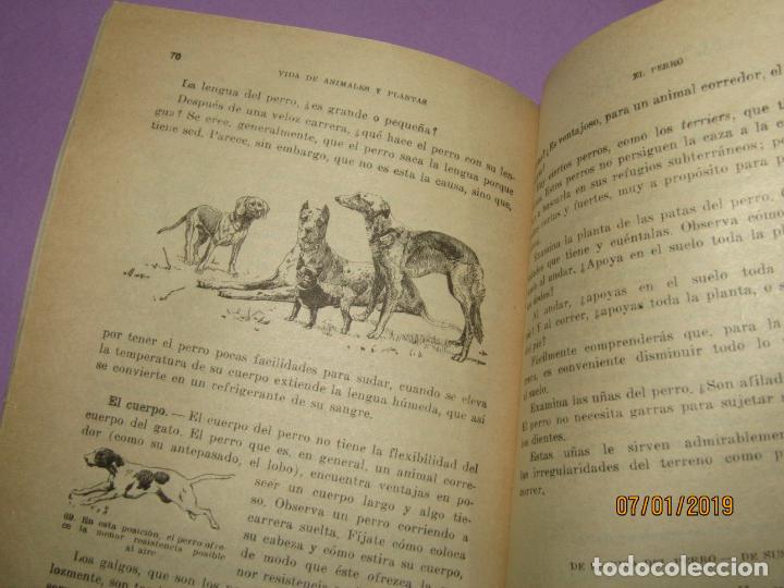Libros de segunda mano: Antiguo Libro de Escuela VIDA DE ANIMALES Y PLANTAS Editorial PARANINFO - Año 1963 - Foto 4 - 146169310