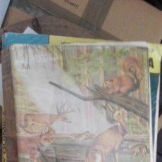 Libros de segunda mano: CIENCIAS NATURALES.1 BUP.ECIR. Lote 170709245